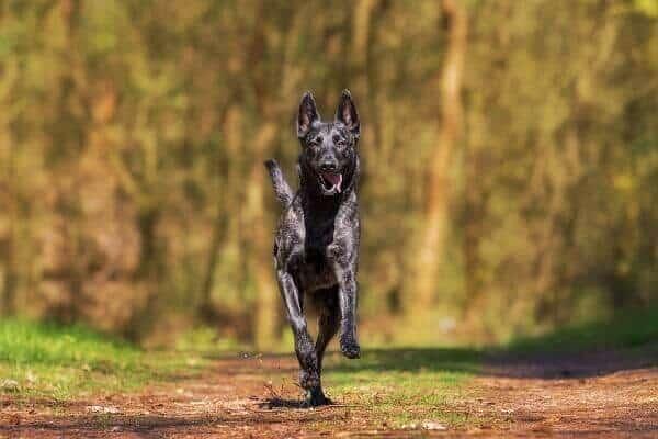 GPS Tracker für Hund und Katze